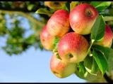 Яичная скорлупа не удобрение! Уход за яблоней. Гидропосев... - YouTube