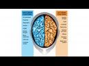 Тренируй мозг! Гармонизация правого и левого полушария