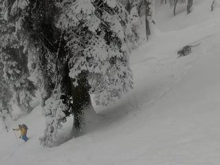 Leopard in the snow in Gulmarg, Kashmir