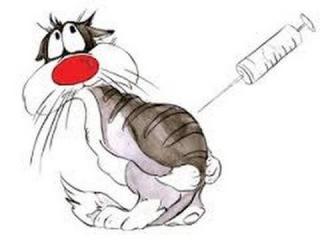 Как сделать укол кошке? Внутримышечный укол кошке. Подкожный укол кошке?