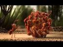 Сила единства l Пингвины, светлячки, крабы, муравьи