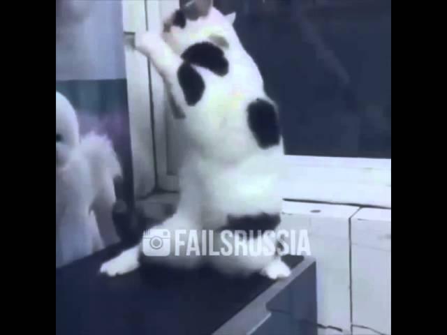 Женщина я не танцую кот