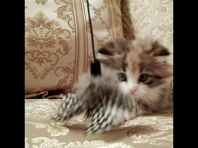 Джесси очень активный котёнок и с ней не соскучишся 😼