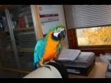 Случайно залетевший в квартиру попугай шокировал хозяев. Осторожно ненормативная лексика