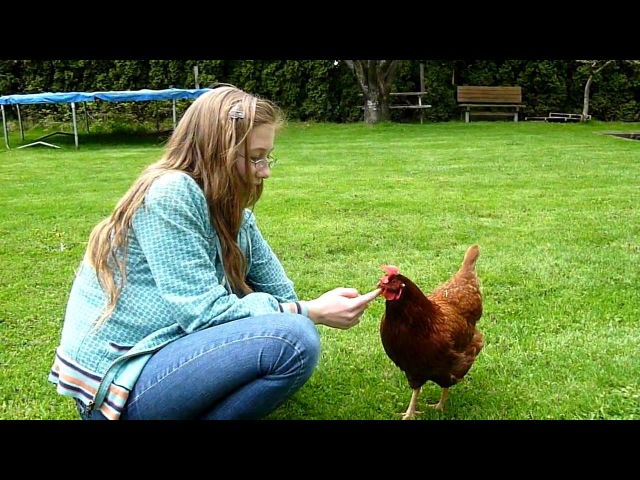 The Very Best of Pets! (Chickens of course!)