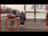 Пешеходы - Урок Жизни АвтоСтрасть