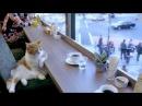 Sad cat feat. Михаил Шуфутинский - 3-е сентября