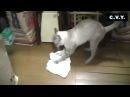 Кот моет пол