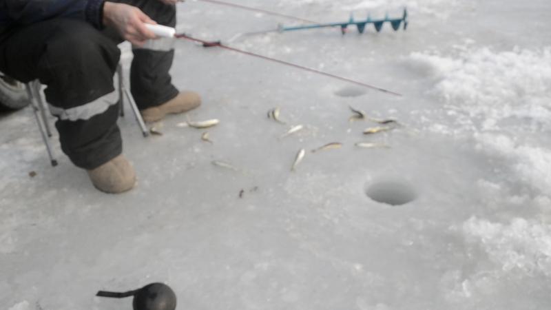 Навага Корюшка на Майхе Приморский край зимняя рыбалка