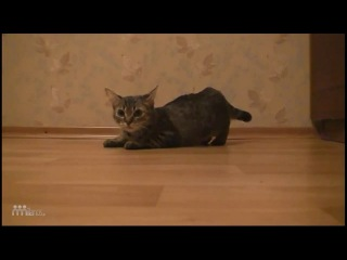 самый быстрый кот в мире ! (прикол про кота )