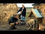 Весьегонская волчица.avi