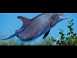 прощание дельфинов | Автостопом по галактике  The Hitchhiker's Guide to the Galaxy