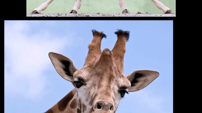 У жирафа пятна пятнышки везде » Freewka.com - Смотреть онлайн в хорощем качестве