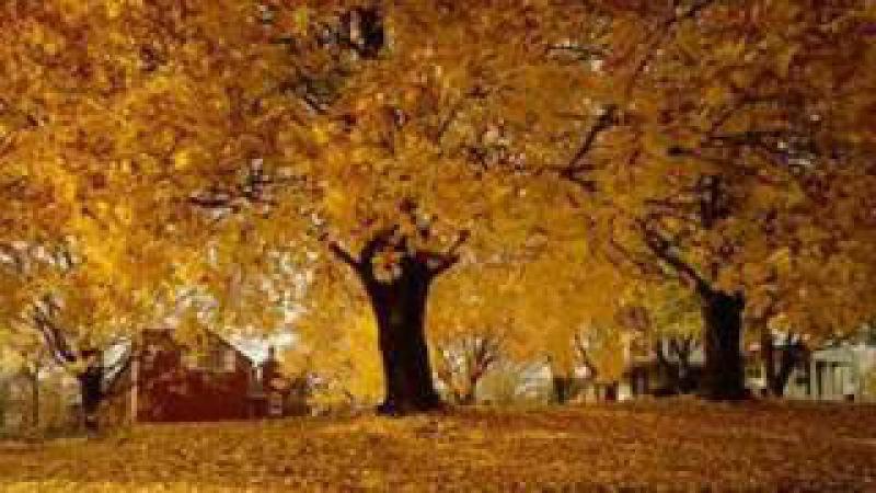 Doris Day - Autumn Leaves - 1956
