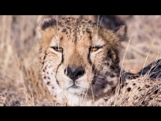 Safari south africa a time lapse film in 4k