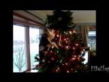 Кошки и новогодние елки.