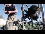 Мал базары (Киргизия, 29-й выпуск ФОТОЕД)