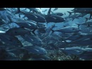 Королевство океанов 2011 Фильм Первый