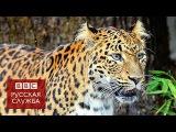 Леопард напал на людей в школе в Бангалоре