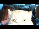 Прикол: Накуренный в щи мужик и странный кот