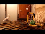 i am a bird motha f cker soccer bird remix (Vine Video)