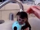 Маленькую обезьянку моют.
