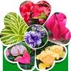 flors.ru Самый большой магазин комнатных цветов