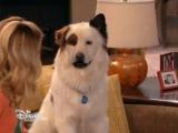 Собака точка ком 3 сезон 9 серия