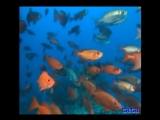 Relax - Подводный мир (Вангелис)