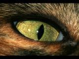 Почему нельзя смотреть в глаза кошке.