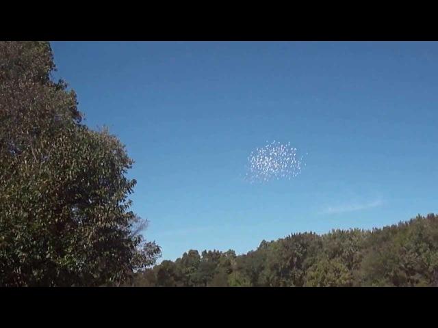 That was his last 500 birds in the sky. His last flight. In memory of Mr. Vito Feliz
