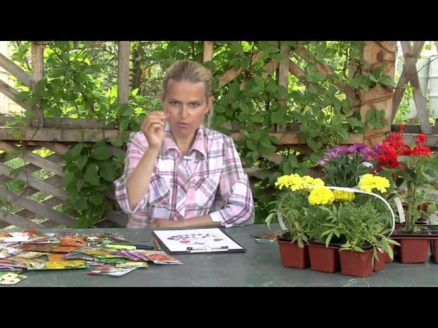 Дизайн цветников. Составление плана цветника.Часть 2