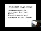 Кость как орган 101012.pptx