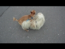 Собака-гомосяка