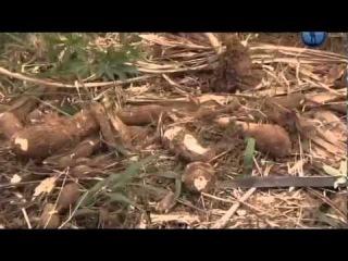 Гуарани - Последние индейцы бассейна Амазонки