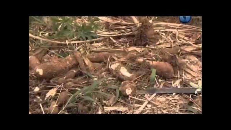 Гуарани Последние индейцы бассейна Амазонки