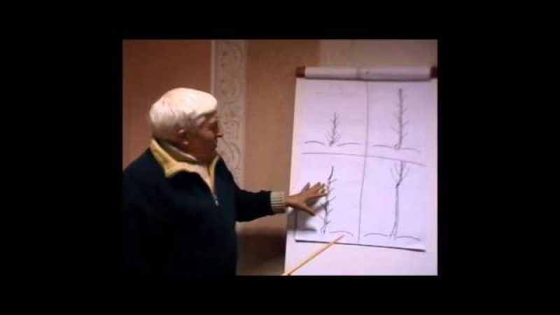 Формирование кроны дерева грецкого ореха