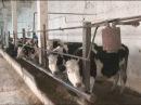 Зеленая альтернатива. Фильм первый. Основы выращивания гидропонных кормов.