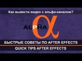 Как вывести видео с альфа каналом в Adobe After Effects? Быстрые советы по Adobe After Effects