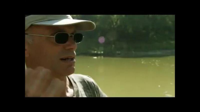Речные монстры - Панцерник аллигатор