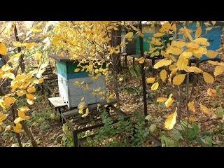 Последняя подготовка пчел к зимовке