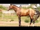 «Ёлочка 2016» под музыку группа Великан - Далеко, далеко ускакала в поле молодая лошадь. Picrolla