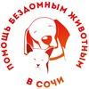 Помощь бездомным животным в Сочи