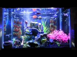 How to combine the beta fish with other species of fish (all in one aquarium)... a good idea.