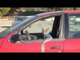 Pet Peeves School Edition - Aaron's Animals