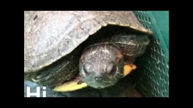 C*cks*cking Turtles