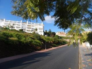 День за днем, жакаранда, лантана сводчатая, Фуэнхирола, Андалусия, 7-9 января 2016 г