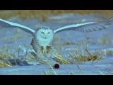 OWLS MAKING THE KILL