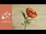 Цветы из фоамирана - мастер класс по созданию мака