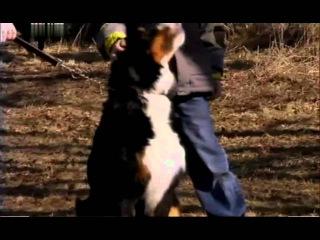 Введение в собаковедение 101 Dogs Часть 13 Animal Planet